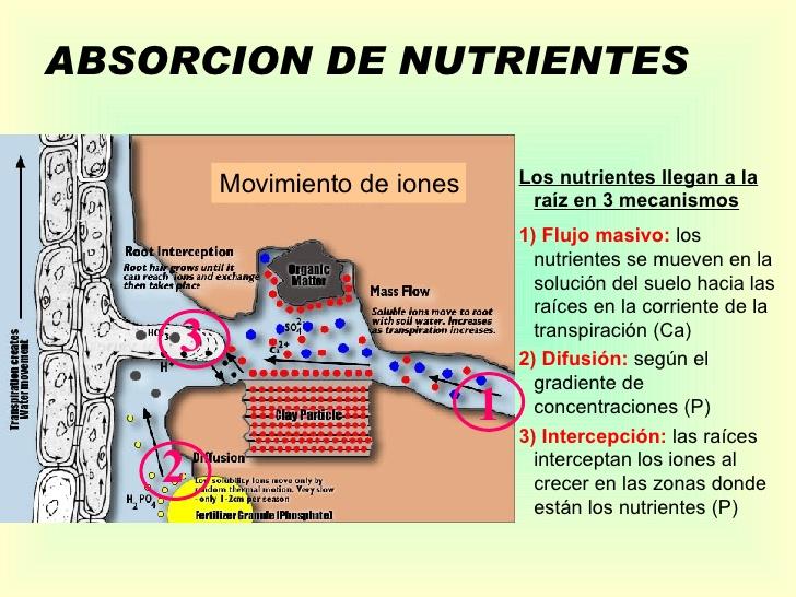 nutrientes_disponibilidad