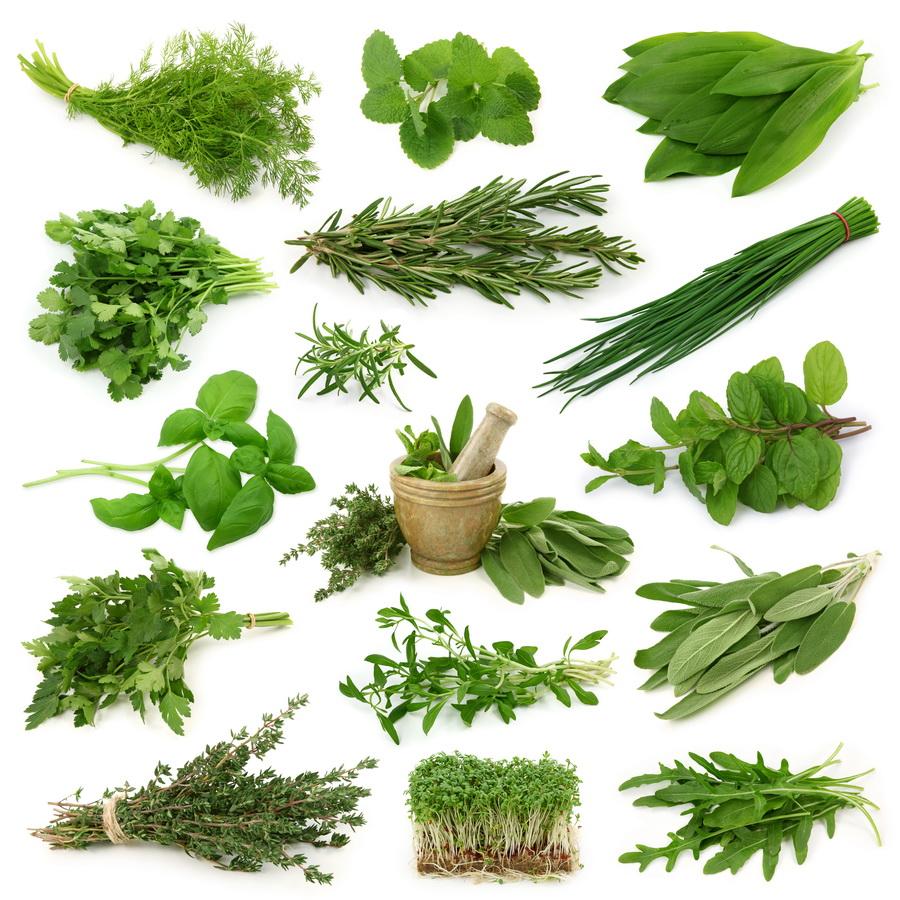 Blog ecogardenirisana for Cultivo de plantas aromaticas y especias